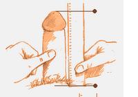 tomas kruizinis varpos ilgis