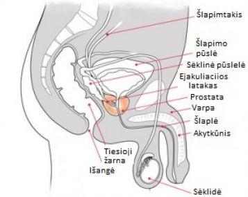 varpos skausmas produktai puikiai erekcijai