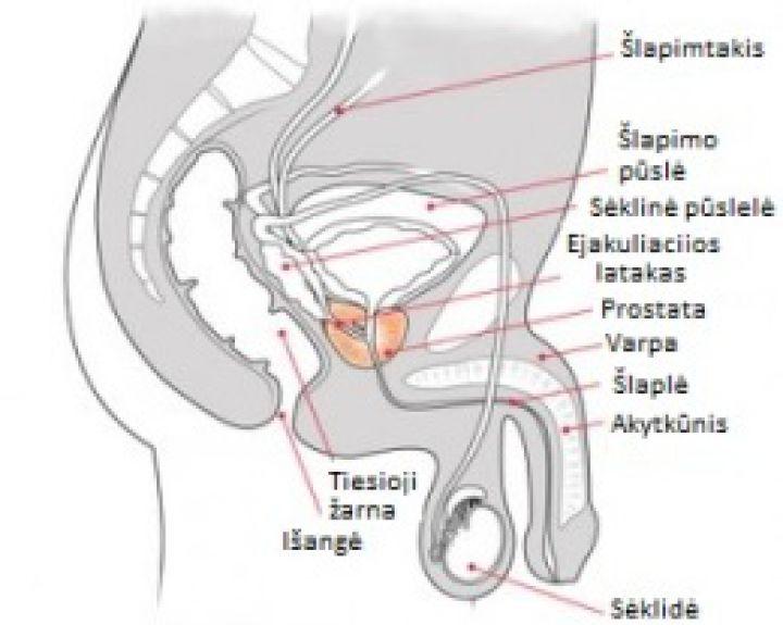 sėklidžių ir varpos ligos po sutrenkimo nėra erekcijos