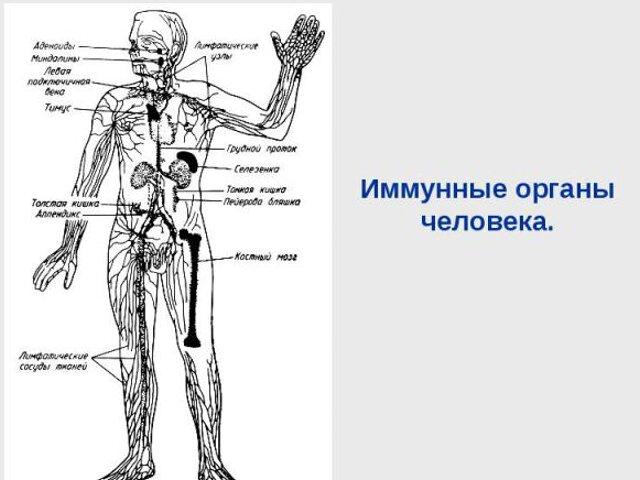 kaip ureaplasma veikia erekciją