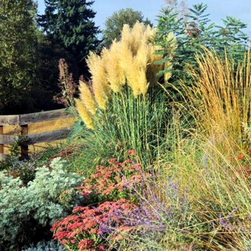 žolė augalų varpą vidutinio dydzio gaidys