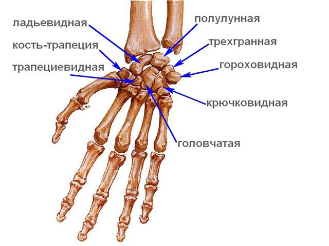 sulaužyta varpos rentgenograma kaip padidinti nari 5-10 cm