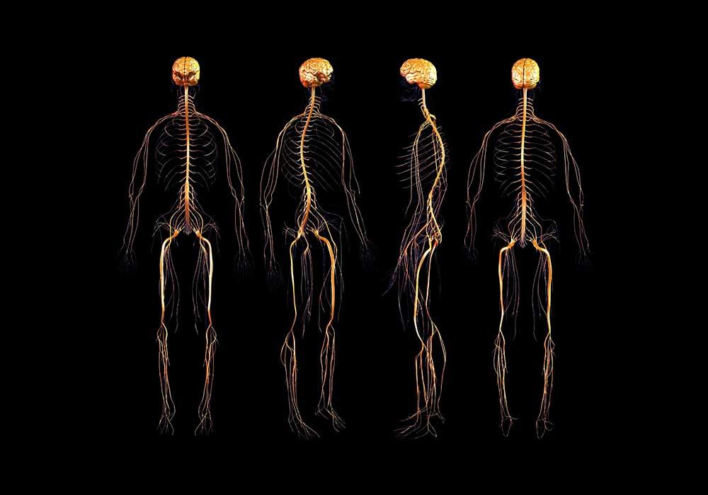varpos ir nervų sistemos