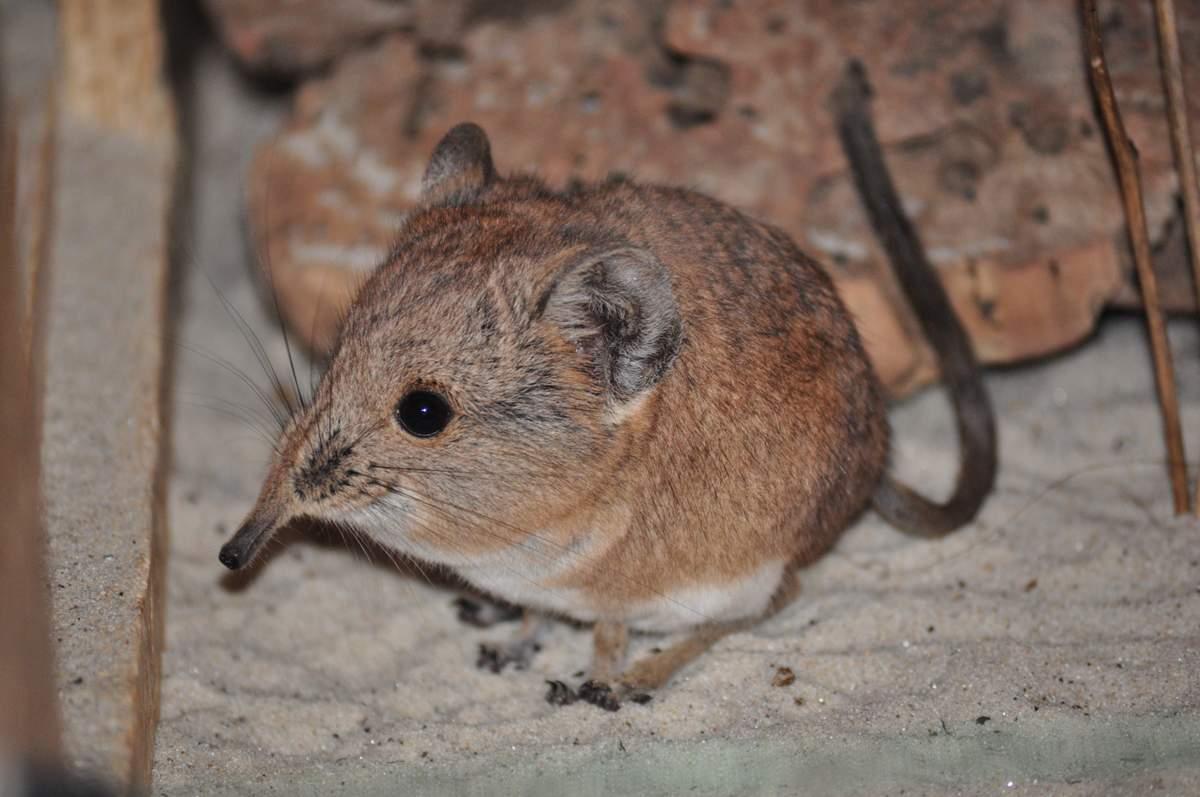 varpos ir pelės ausys kokie dydziai susitiko su nariais
