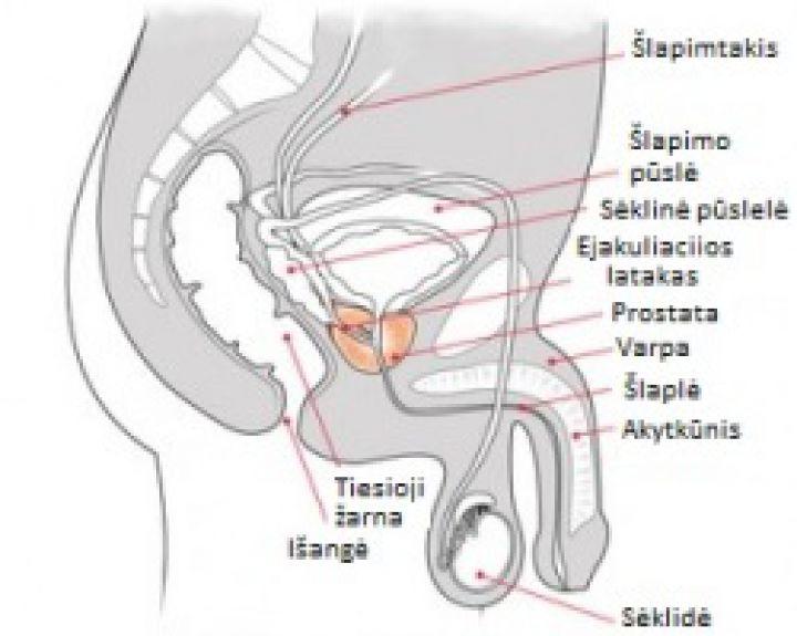 erekcijos klasifikacija su erekcija padidėja slėgis